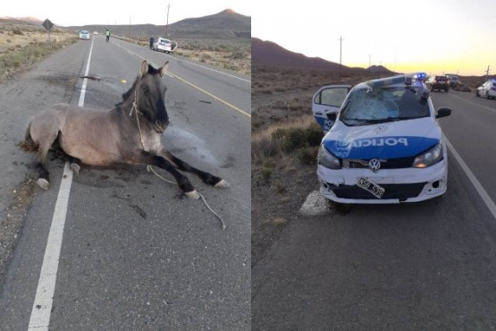 El caballo herido y el patrullero con destrozos.