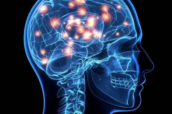 Científicos lograron ver cómo el cerebro guarda memorias mientras dormimos