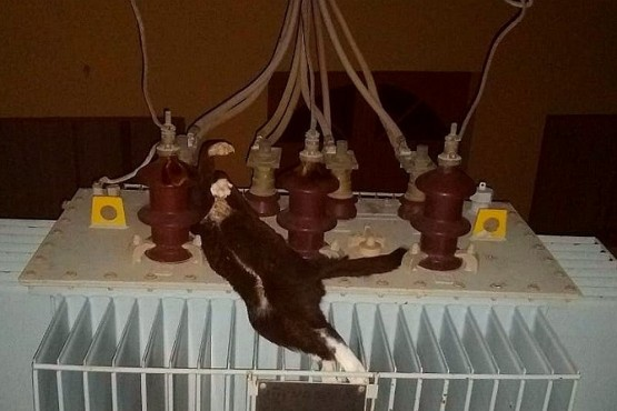 Un gato se electrocutó en un transformador y cortó la luz en los barrios