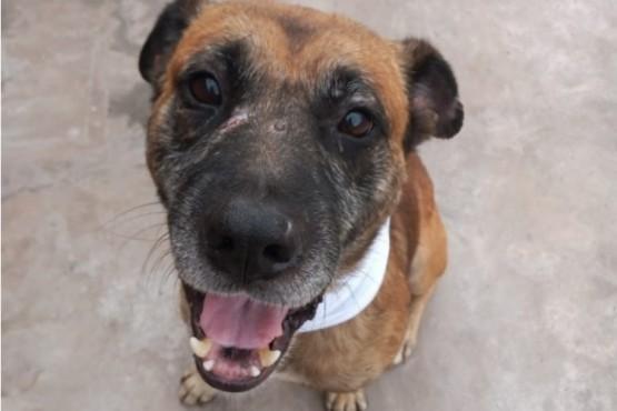 """""""Loko"""", el perro que vende plantas para pagar su quimioterapia tras sufrir maltrato"""