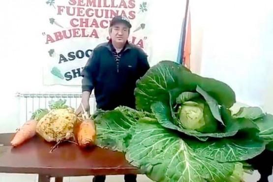 Cosechó un repollo de 9 kilos, un nabo de 7 y zanahorias de más de 2 kilos