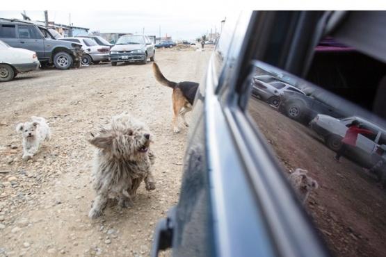 Preocupa la inacción ante la problemática de superpoblación canina