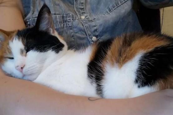 """Una pareja creó un """"falso regazo"""" para que su gato los deje trabajar"""
