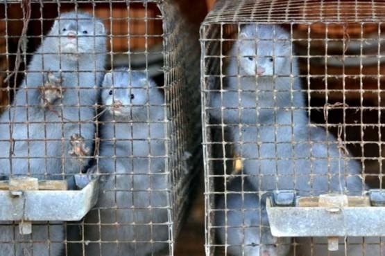 """La OMS encontró """"los primeros casos"""" de contagio de animales a humanos"""