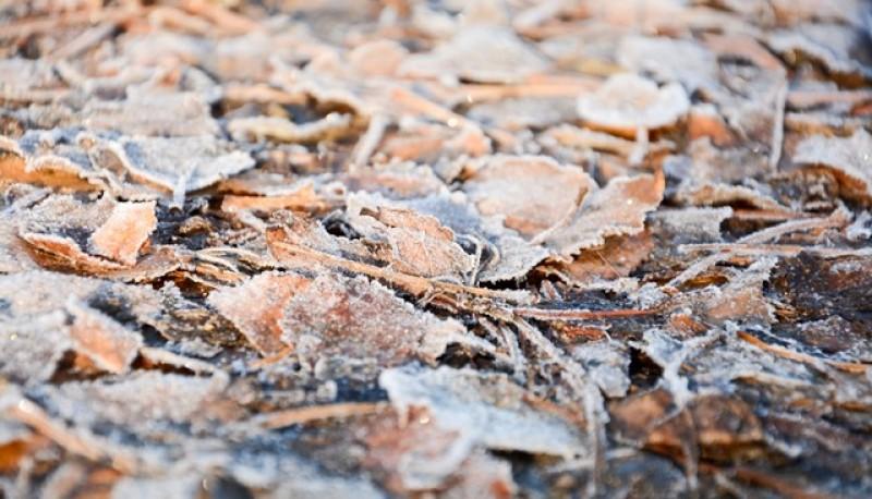 Hojas secas en la calle (Foto F.C.)