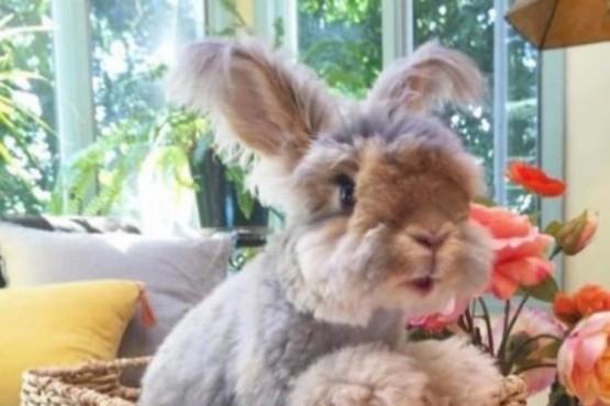 El curioso conejo adoptado con unas orejas que son sensación en las redes