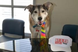 Por qué hoy se celebra el Día Nacional del Perro
