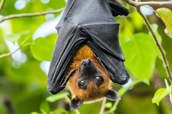 Cayeron cientos de cadáveres de murciélagos desde el cielo y buscan las causas