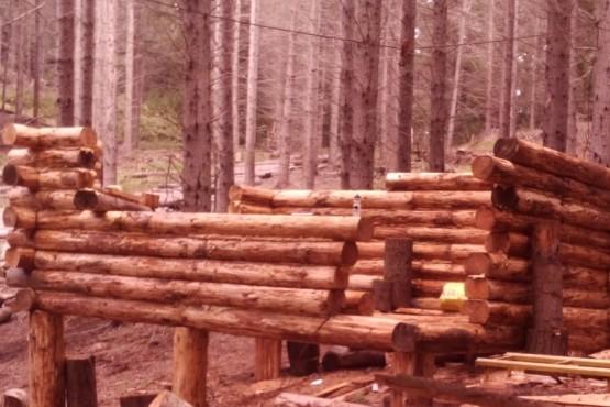 Policía y Bosques investigan robo de madera en forestaciones de la provincia
