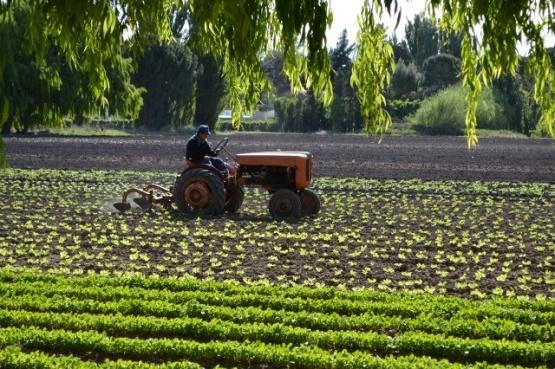 Gobierno prorroga el cobro de cuotas de créditos para productores