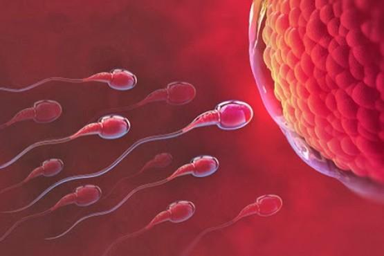 Un estudio reveló que los óvulos pueden elegir el tipo de esperma que atraen