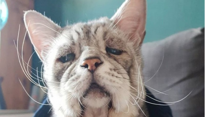 La conmovedora historia del gato tristón que padece una extraña condición genética