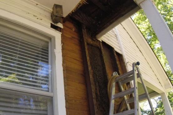 Descubrieron una enorme colmena con abejas vivas en el interior de su casa escondida durante 50 años