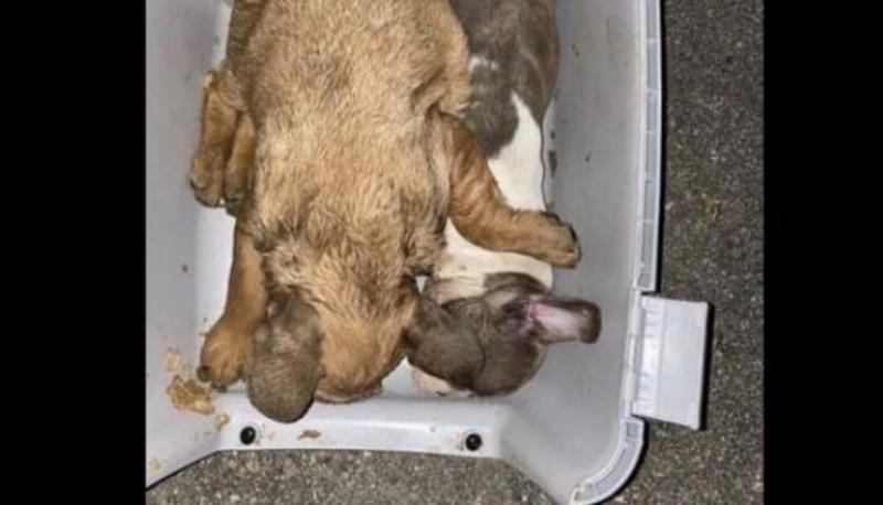 Hallaron 38 cachorros muertos en la bodega de un avión
