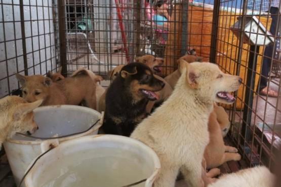 Inauguraron feria de carne de perro en medio de la pandemia