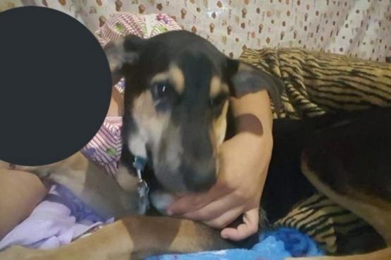 Denunciaron a una mujer por abusar sexualmente de su perro