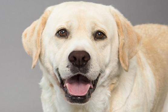 ¿De qué color ven los perros?: un experto reveló la verdad científica detrás del mito