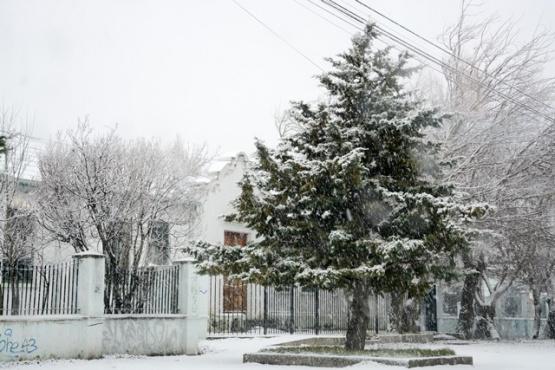 Árbol nevado (Foto archivo - Capadora).