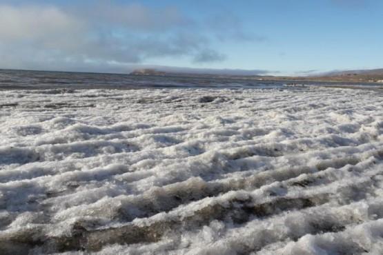 Orilla del Lago Argentino.