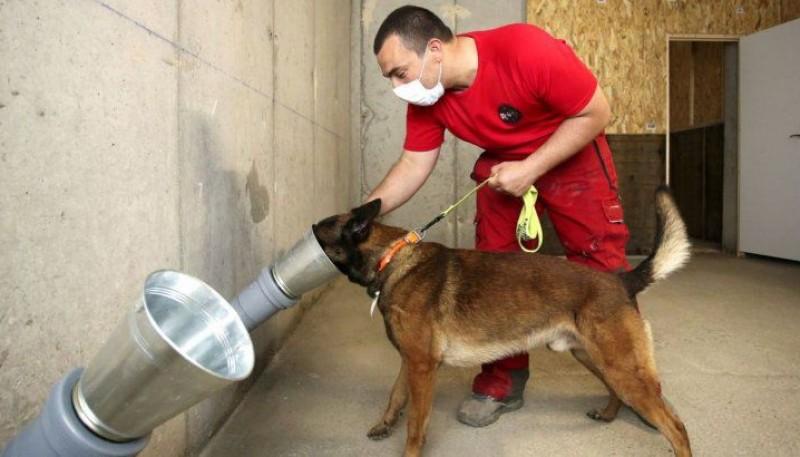 La UBA comenzará a entrenar perros para detectar el coronavirus