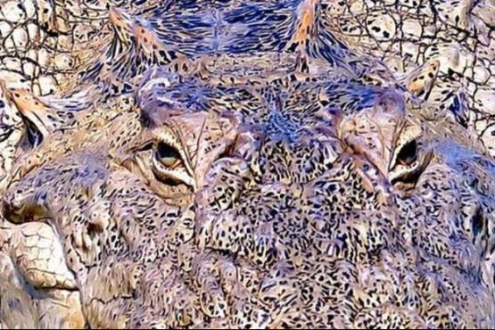 El nuevo reto viral que enloquece a más de uno: ¿Qué animal es?