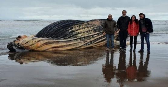 Dejarán en la playa el cuerpo de la ballena jorobada