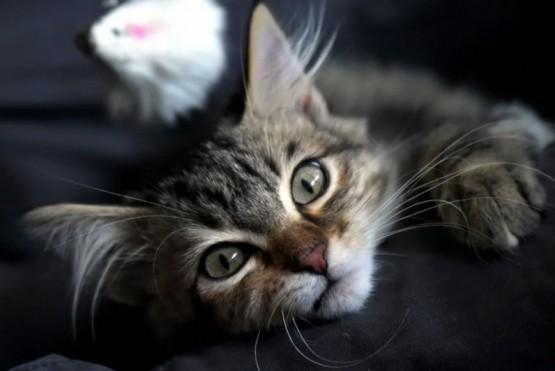 Prendió el lavarropas con su gato dentro y sobrevivió de milagro