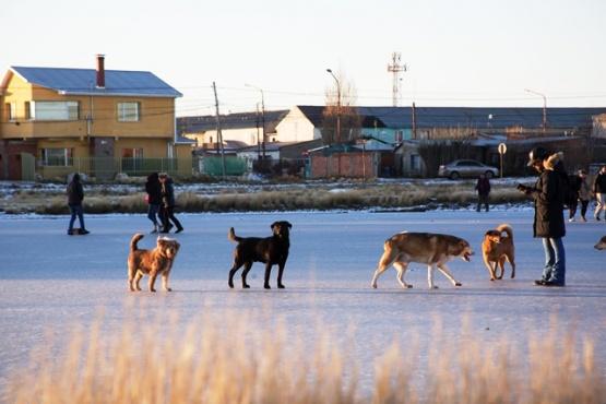 Los perritos sobre una laguna congelada la semana pasada. (C.G)