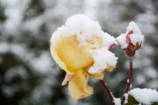 Con alerta por nevadas en la cordillera, así está hoy Chubut