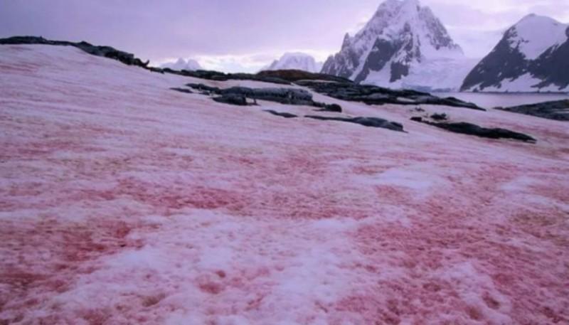 Apareció nieve teñida de rojo y preocupa a los especialistas