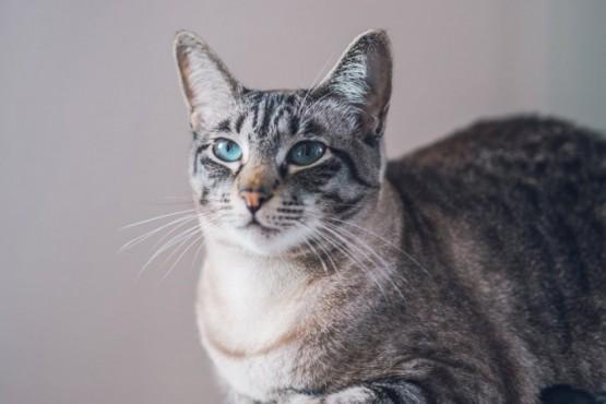 Una anciana murió tras ser arañada y lamida por su gata