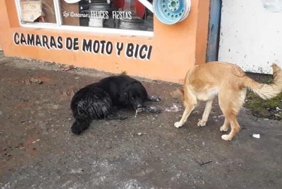 Perros encontrados en la vía pública por proteccionistas
