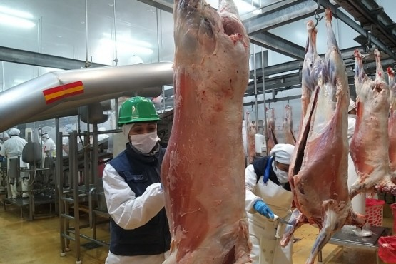 Certificación de 15 toneladas de carne ovina congelada con hueso a Japón