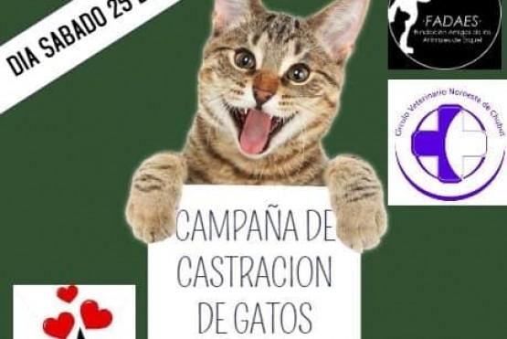 Castración de gatos en la vecinal del barrio Matadero