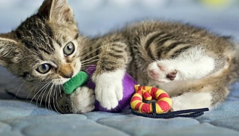 Una mujer fue al cuarto de su bebé y encontró a sus gatos en la cuna con los juguetes de su hijo