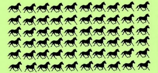 Encontrá seis caballos diferentes en menos de 30 segundos