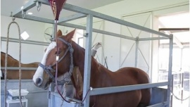 Arrancó el ensayo clínico con suero de caballos