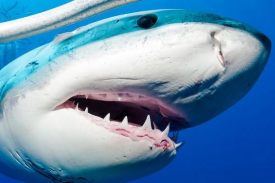 """""""Había mucha sangre en el agua"""": un tiburón blanco acabó con la vida de una mujer"""