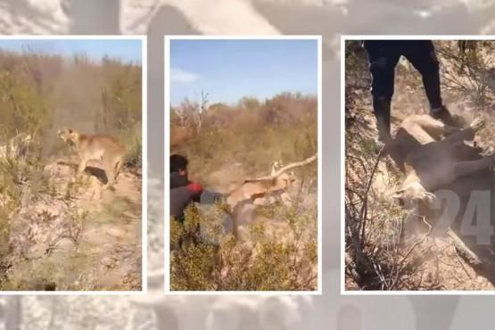 Mataron a un puma a palazos y filmaron el ataque
