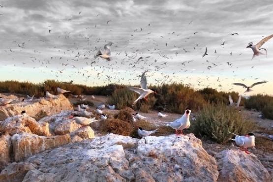 Río Negro impulsa la creación de un Parque Nacional Marino Costero
