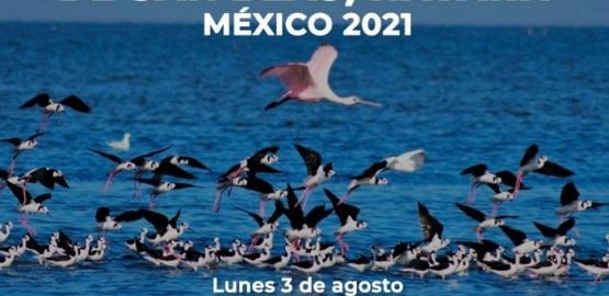 Rio Gallegos será parte del Festival Internacional de Aves Playeras Migratorias