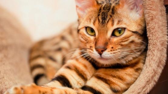 Día Internacional del Gato: por qué se celebra hoy y dos veces más durante el año