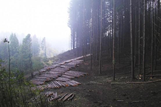La Secretaría de Bosques licita lotes de madera de las forestaciones provinciales
