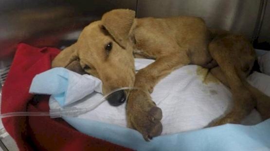 Murió un perrito de 6 meses luego de sufrir una agresión sexual