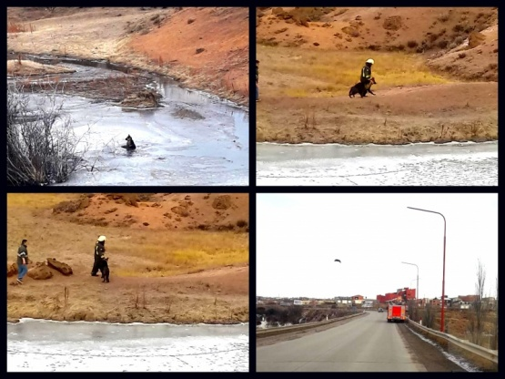 Bomberos rescataron un perro de una laguna congelada