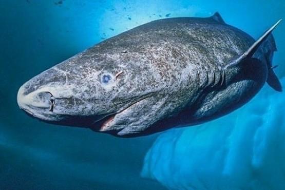 Aseguran que encontraron vivo al animal más viejo del mundo: nació en el 1500