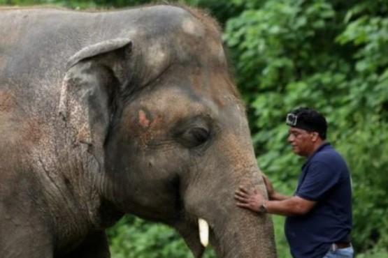 La triste historia de Kaavan, el elefante que vivió 35 años encerrado en un zoológico