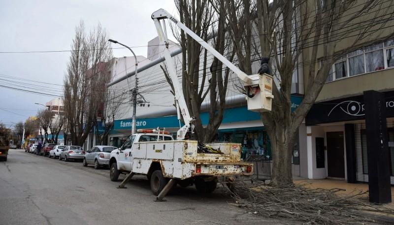 10 Acciones: Realizan importante operativo de poda en la avenida Kirchner
