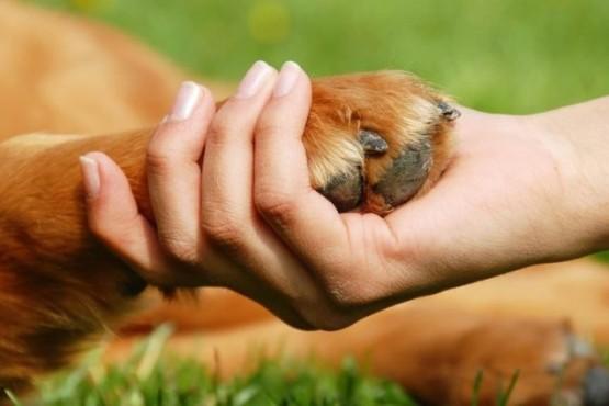"""Por qué tu perro te """"da la pata"""", la explicación científica del gesto canino"""