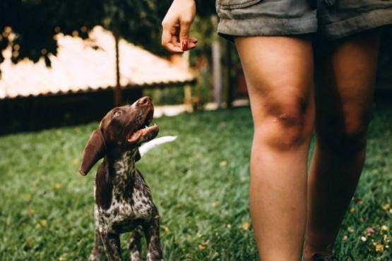 ¿Tu perro te sigue a todas partes? Estos son los motivos